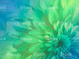 Shaggy Flower On A Greenblueyellow Transparent Background stock ...