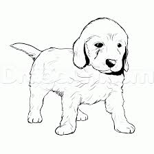 How To Draw A Labradoodle Step