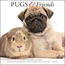 pugs and friends 2019 wall calendar calendars books gifts
