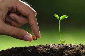 hand planting a seed in the soil next to a small seedling