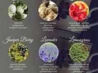 50 Best <b>HERBAL TEAS</b> images in 2020 | Herbalism, Tea recipes ...