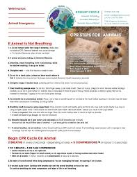 Training And Resources For Animal Disaster Rescuers Kinship