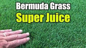 Liquid Lawn Fertilizer Spray Treatment For Lawns