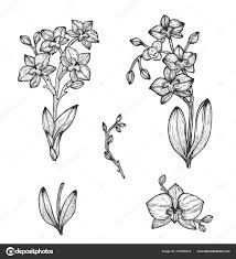 орхидея рисунок руки векторные иллюстрации эскиз векторное