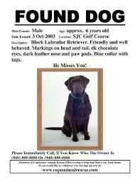 Dog Flyer Template Free 010 Found Dog Flyer Template 636879 Ideas Lost Ulyssesroom