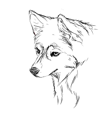 Drawn Husky Huskey Pencil And In Color Drawn Husky Huskey