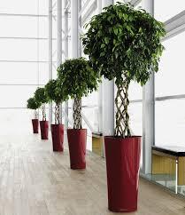 modern office plants. Office Plants Modern L