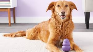 anxiety toys for dogs.  Toys 5 Toys That Will Help Ease Separation Anxiety In Dogs And For E