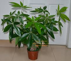 plants for office space. exellent office full image for stupendous small desk plants 105 best indoor office  online shop in for space