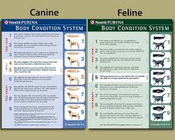 Purina Body Condition Score Chart Its National Pet Week Clarendon Animal Care