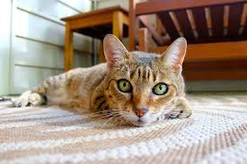 best carpet type for pets