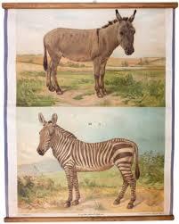 Donkey Zebra Wall Chart By Th Breidwiser For Carl Gerolds Sohn 1879