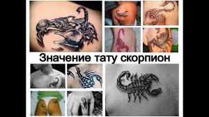 значение тату скорпион факты о рисунке и фото примеры для сайта Tattoo Photoru