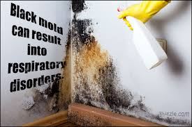Image result for Black Mold