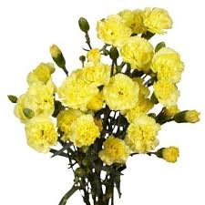 Yellow Carnation Garden Plants Flowers Garden Center The