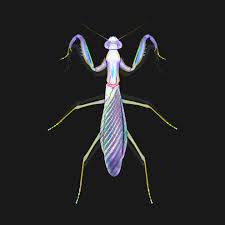 Graphic Mantis