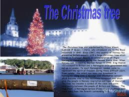 Christmas Trees Penzance Locallygrown Four Varieties  Many SizesWho Introduced The Christmas Tree To Britain