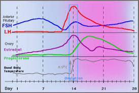 Progesterone Ovulation And Bbt Charting Www Early