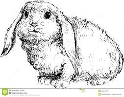 Hand Drawn Cute Rabbit Illustration 43497739