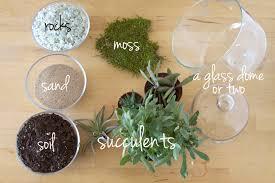 glass dome succulent moss terrarium