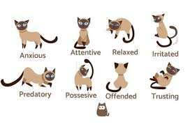 Cat Body Shape Chart Cat Body Language Examples And Pictures