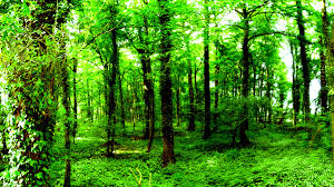 hd wallpapers nature forest. Interesting Nature Forest Wallpaper HD Intended Hd Wallpapers Nature L