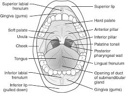 nose and cavity