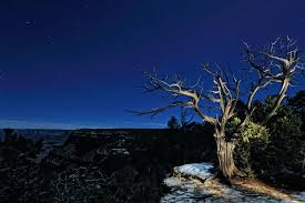 diana robinson photo of a tree on the edge of the south rim of the grand