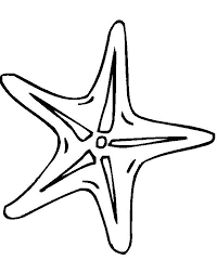 Small Picture Starfish Coloring Pages Clipart Panda Free Clipart Images Coloring