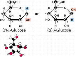 glucosealpha gifthis is glucose first  let    s explain the     alpha     and     beta     terms  you    ll notice that the diagram shows the alpha form of glucose and the beta form of