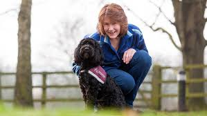 jobs with deaf people 8 things you might not know about hearing dogs for deaf people