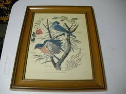 Arthur Singer Naturalist And Painter Of Birds Framed Prints ...