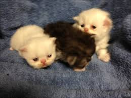 getting the best newborn kittens for