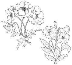 Poppy Flower Coloring Pages Hiscafulcom