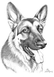 Download Coloring Pages. German Shepherd Coloring Pages: German ...