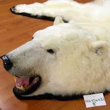 polar bear bear skin rug threatened status jpg