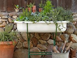 a sink ful of herbs