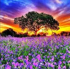 Flower field sunset Wild Flower Sunset Over Flower Field lt3 Had Dream About Place Like This Pinterest 726 Best Flower Fields Images Field Of Flowers Landscape Nature