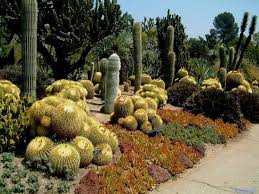 Small Picture 26 best Cactus garden ideas images on Pinterest Gardening