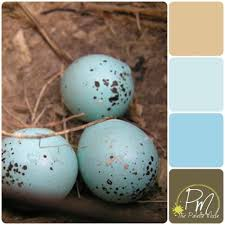 Robin <b>Eggs Palette</b> - The Palette Muse