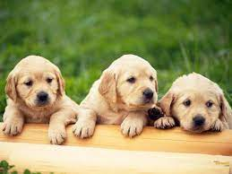 3D Baby Dog Wallpapers - Top Free 3D ...
