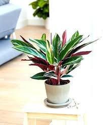 small office plant. Office Plant Ideas Full Image For Desk Plants No Sunlight Small Low Light .