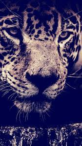 Full Hd Animal Android Mobile ...