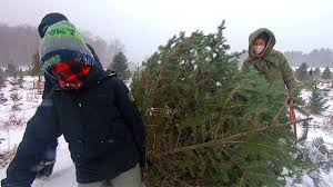 <b>Christmas trees</b> a <b>hot</b> commodity at local farms
