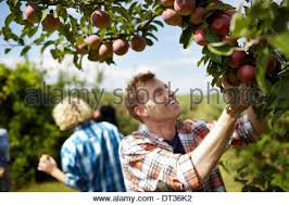 Fruit Pictures  Stock Photos  ColourboxGroup Of Fruit Trees