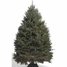 Types Of Christmas Trees Explained Douglas Fir Balsam Fir What Kind Of Christmas Trees Are There