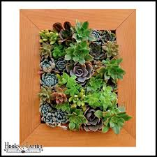 on live succulent wall art with living wall planter with succulents in picture frame box