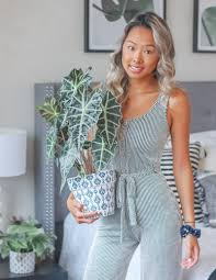 African Mask Plant Light Plant 101 How To Care For An African Mask Plant