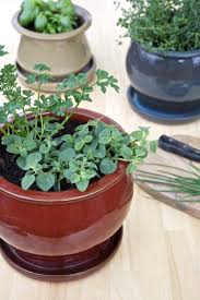 Herb Kitchen Garden Tips For A Small Space Kitchen Herb Garden Kitchn