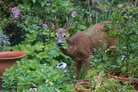 animal garden. Keep Animals Away From Your Garden Animal